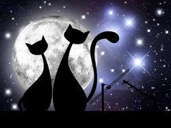 Кошка Скрябин. Несчастная любовь