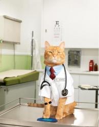 Медицинский профиль кошек