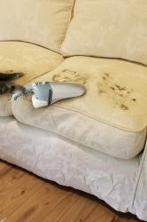 Убираем шерсть кошки с полов и мебели