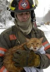 Загорелся кошкин дом!
