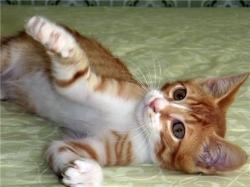 Котёнок: проблемы взросления