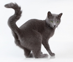 Оставление меток котами и кошками
