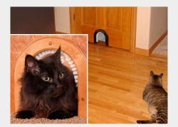 Дверь для кошек