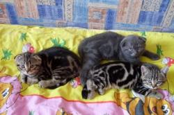 Домик для рождения котят