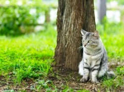Десять простых кошачьих правил