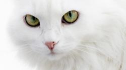 Карл Лагерфельд:  «Шупетт — единственная!»