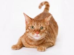 Угощение без вреда. 3 способа  одарить  кошку