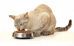 Угощение без вреда. 5 способов использования