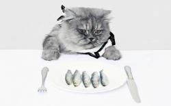 Сколько раз кормить кошку