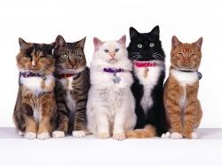 Затраты на кошек