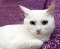Как определить самочувствие кошки?