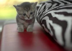 Почему кошки разноцветные?