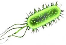 Колибактериоз