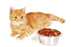Котёнок: кормим правильно