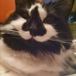 Чеширская улыбка