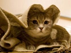 «Кот в мешке». Суть вопроса
