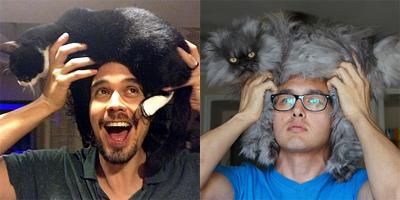 Кота того сделали шапку