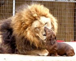 Лев и собачка