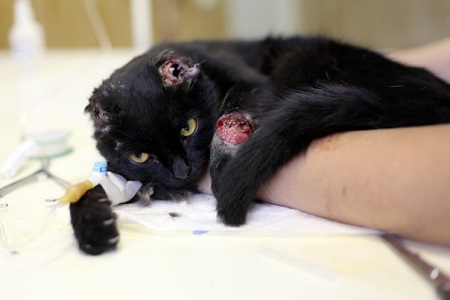 Черный кот воронежа